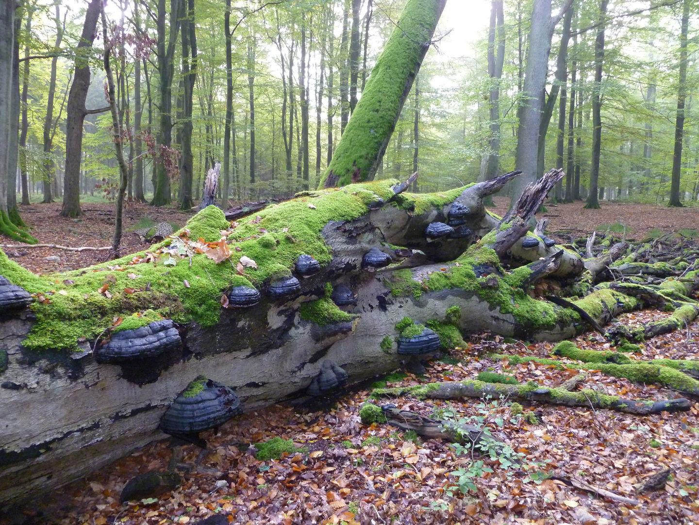 """Podiumsdiskussion """"Wald im Wandel"""" @ Gewerkschaftshaus"""